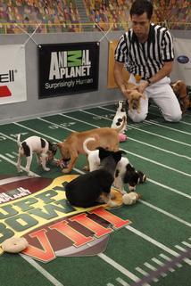 Puppy Bowl VIII
